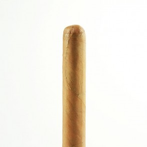 Meine Longfiller Corona